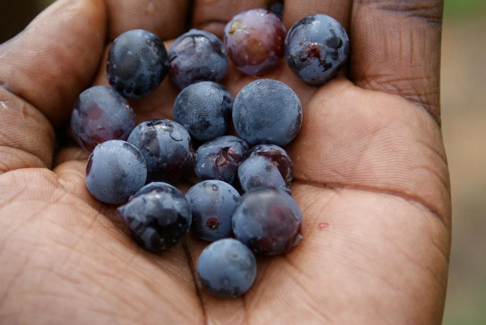32 black grapes