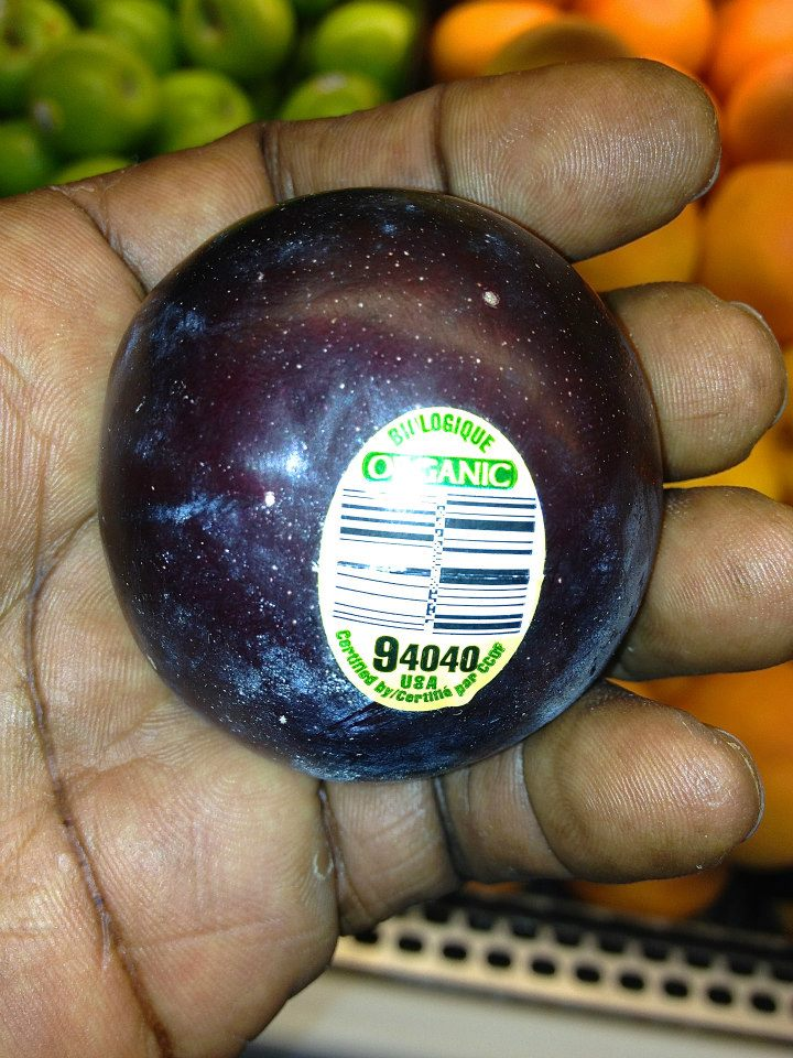 37 roby holding purple black plum