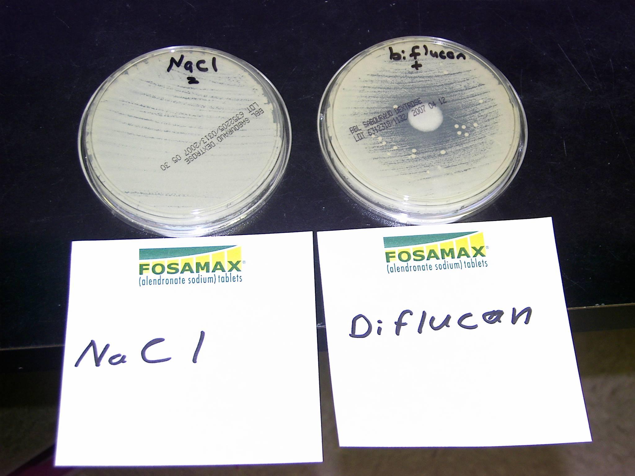 Petri – Sodium Chloride vs Diflucan