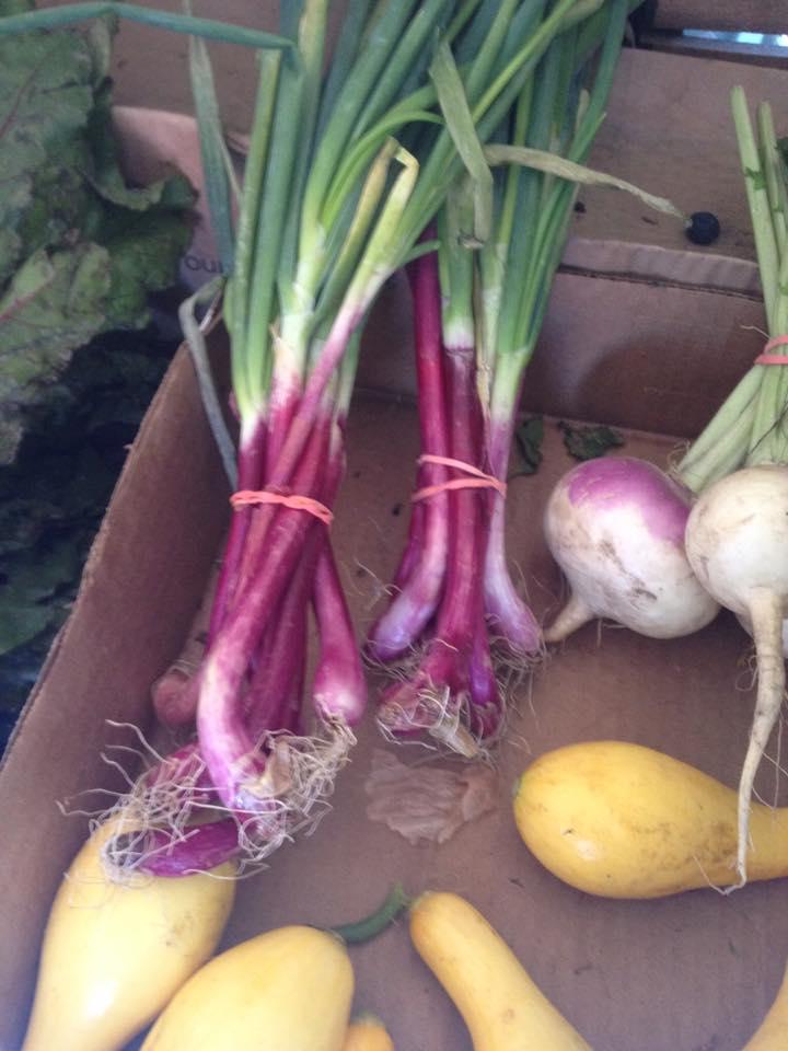 purple onion turnip squash